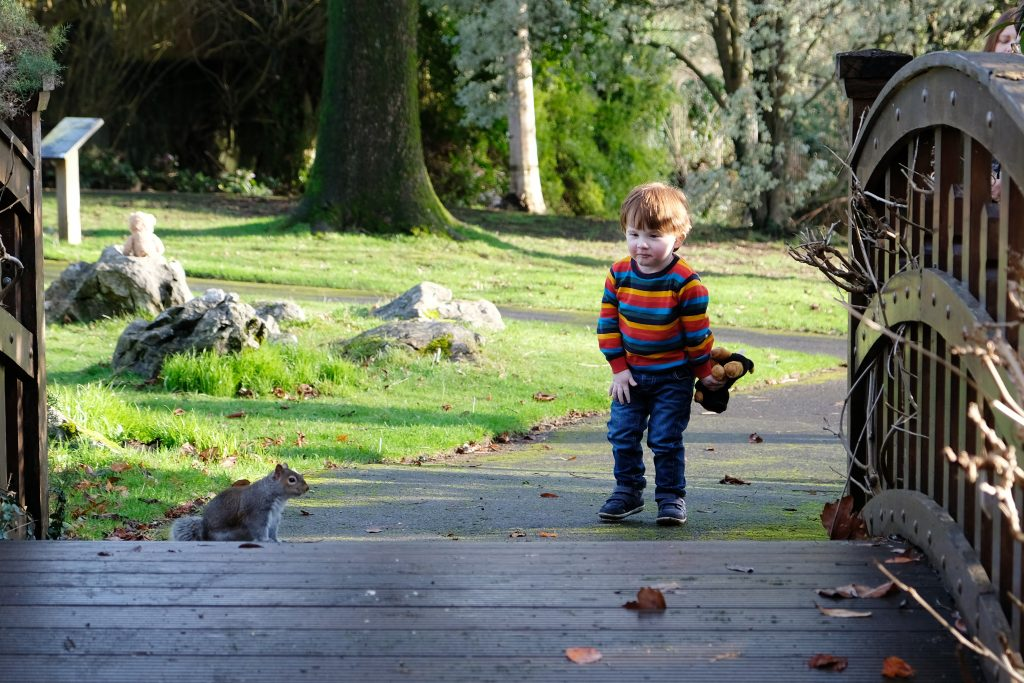 Little boy looking at Squirrel
